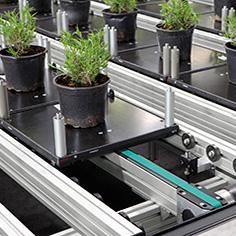 Energieeffiziente Pflanzenförderanlage mit dem Transfersystem TS 2 plus